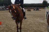 cheval à vendre rennes